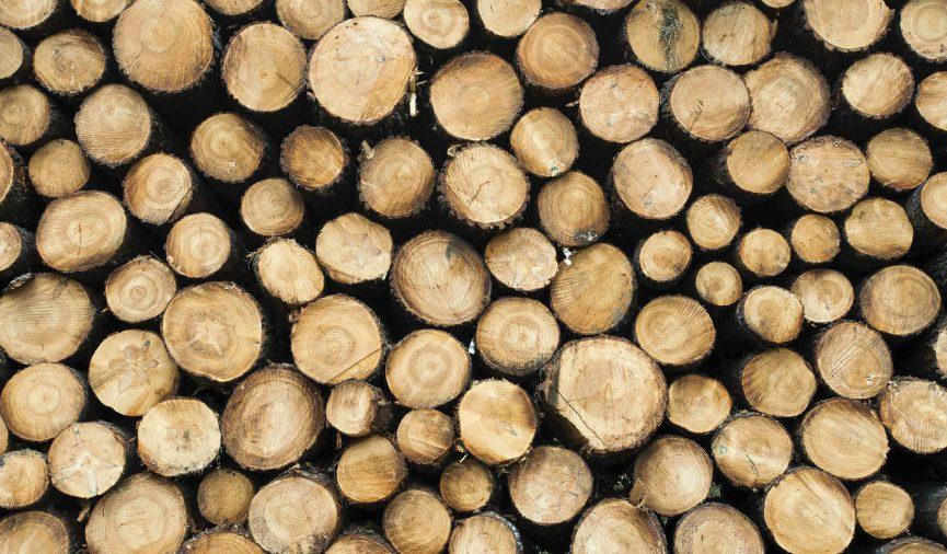 Insieme di legni da lavorare per arrivare al prodotto finale